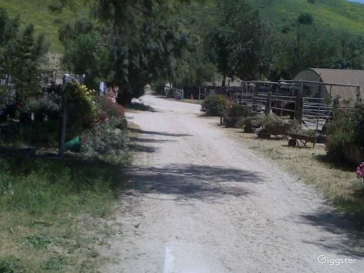 Large Western Town Horse Ranch w/ Animals Photo 5