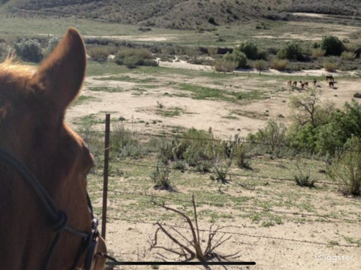 Large Western Town Horse Ranch w/ Animals Photo 3