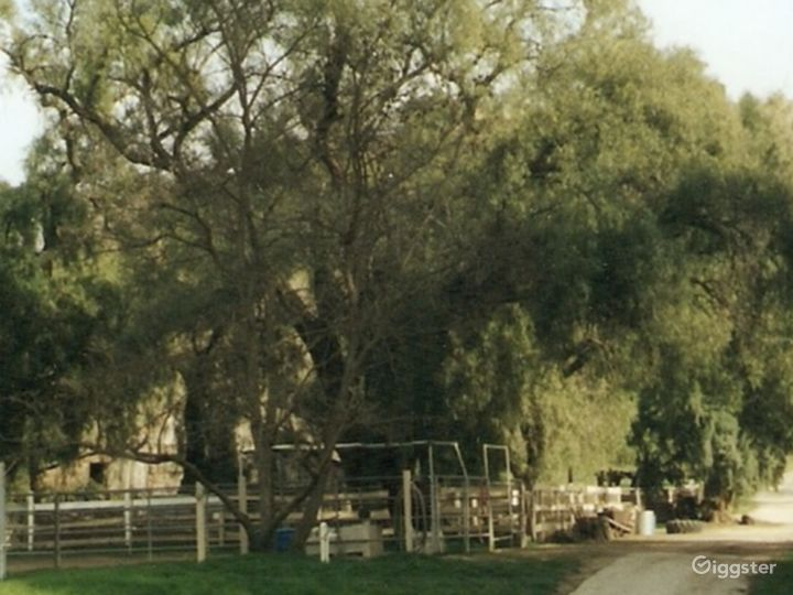 Large Western Town Horse Ranch w/ Animals Photo 2