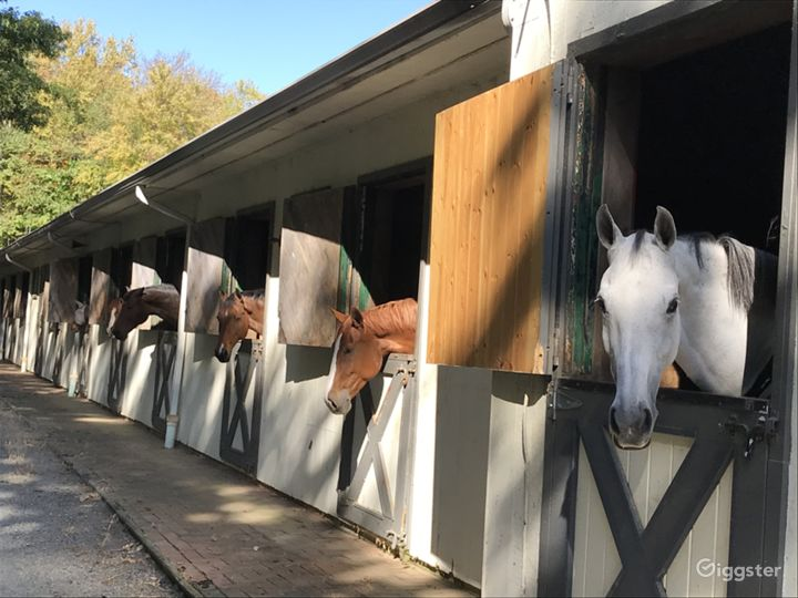Outside Stable Horses looking out of Dutch Doors