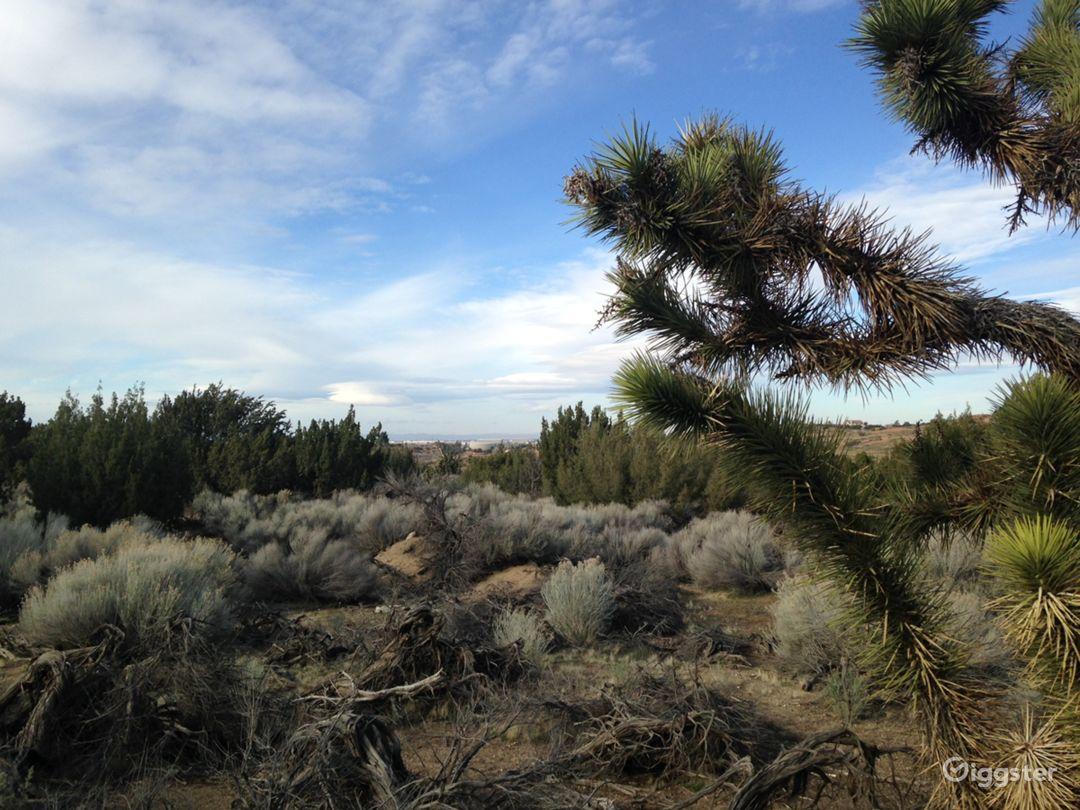Classic Western Desert Land with Joshua Trees Photo 2