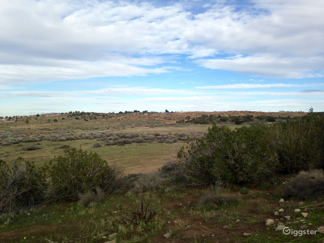 Classic Western Desert Land with Joshua Trees Photo 3