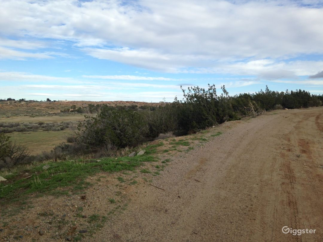 Classic Western Desert Land with Joshua Trees Photo 4