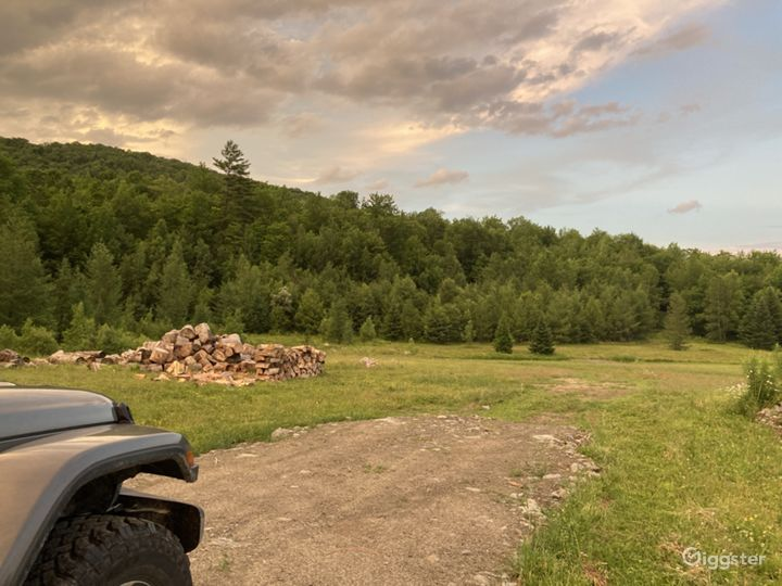 Log piles in meadow (can be removed)