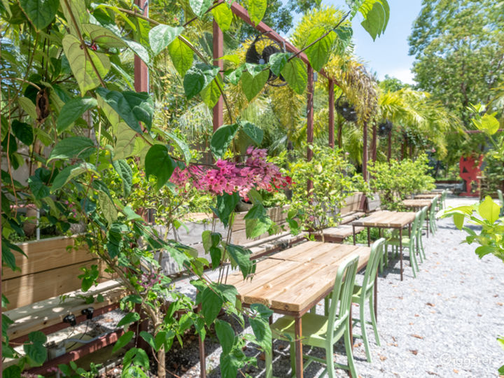 Lemon Grove at Miami  Photo 3