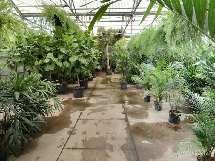 Greenhouses with selection of tropical plants Photo 5
