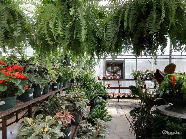 Greenhouses with selection of tropical plants Photo 4