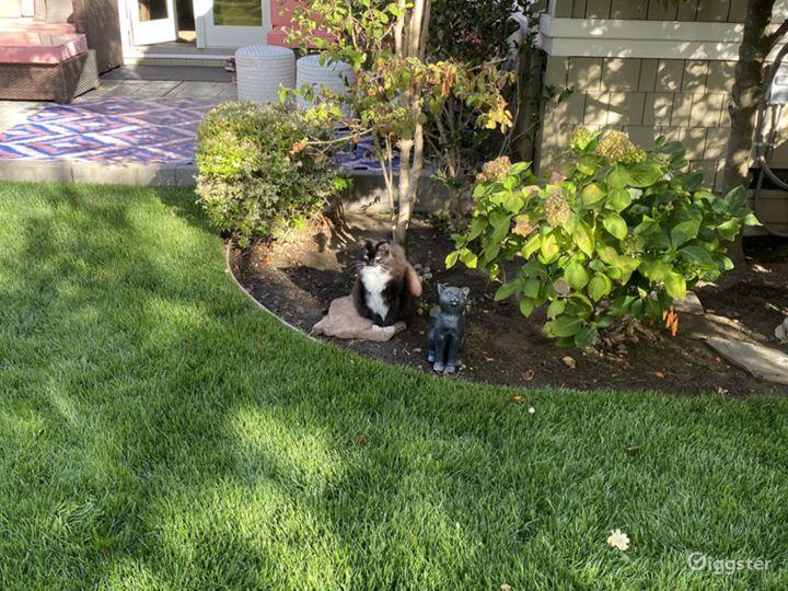 Garden with a cute cat!
