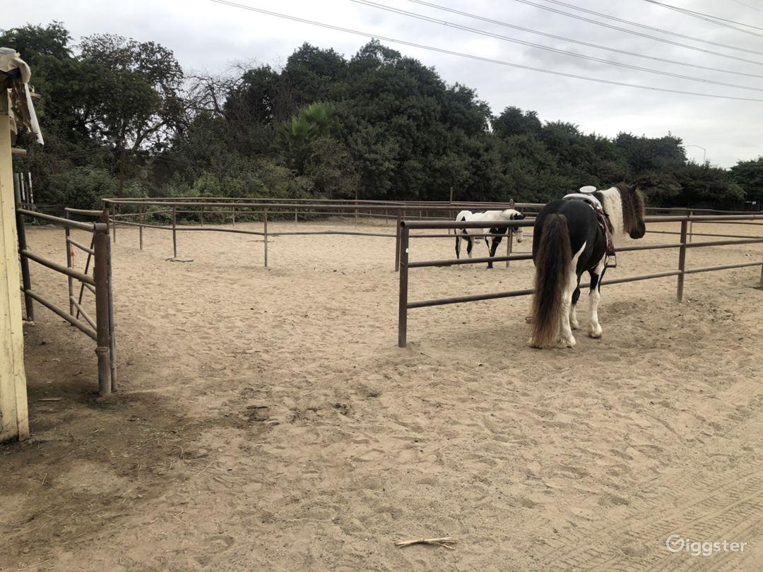 Film Production Farm Ranch With Livestock Animals  Photo 1