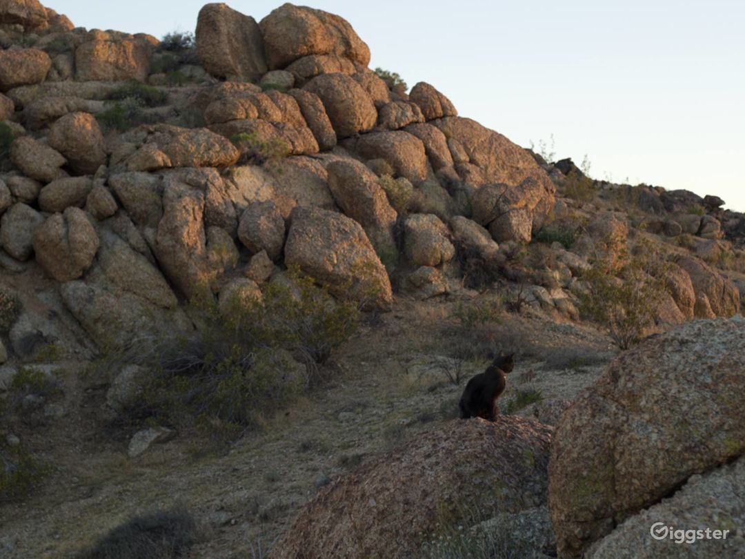 Joshua Tree Boulders Photo 5