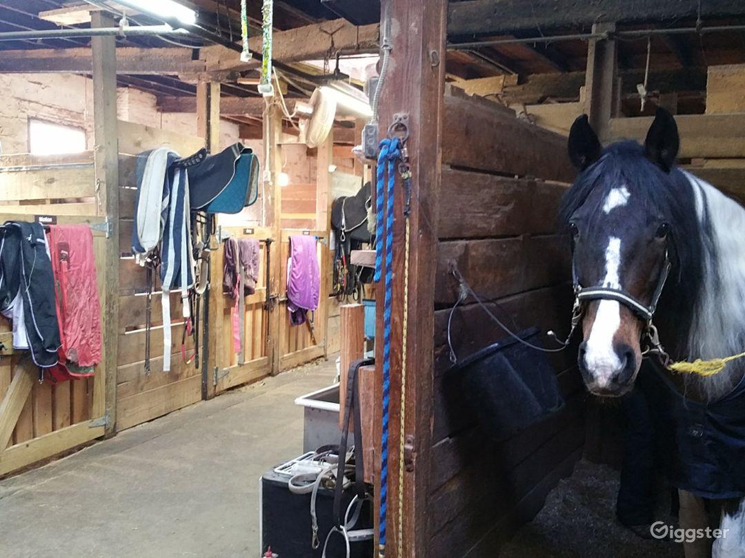 Stable interior and representative horse