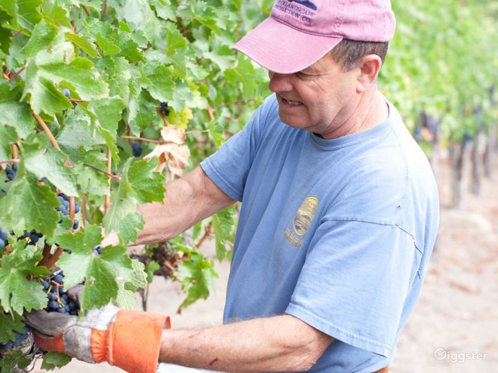 Vineyard and Farm Venue in Novato Photo 5