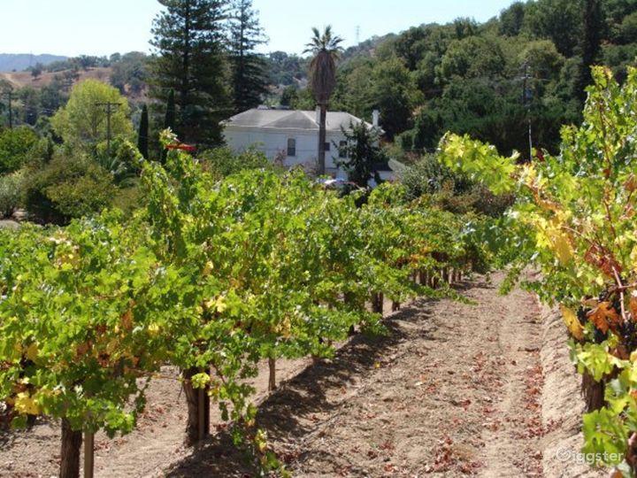 Vineyard and Farm Venue in Novato Photo 3