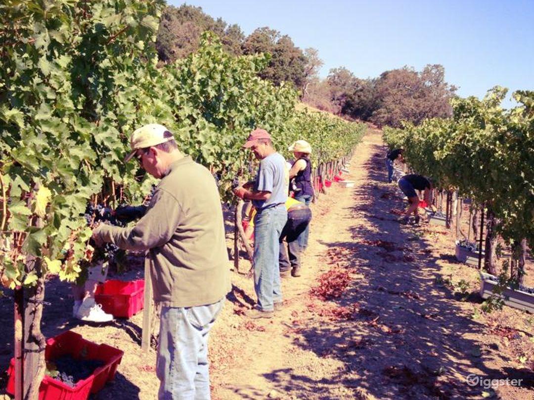 Vineyard and Farm Venue in Novato Photo 1