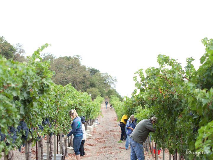 Vineyard and Farm Venue in Novato Photo 2