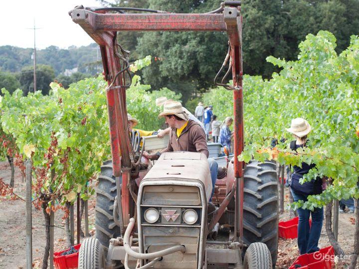 Vineyard and Farm Venue in Novato Photo 4