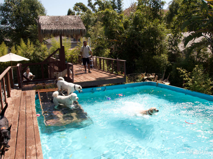 Pet Ranch with several pools and Spanish style Photo 5