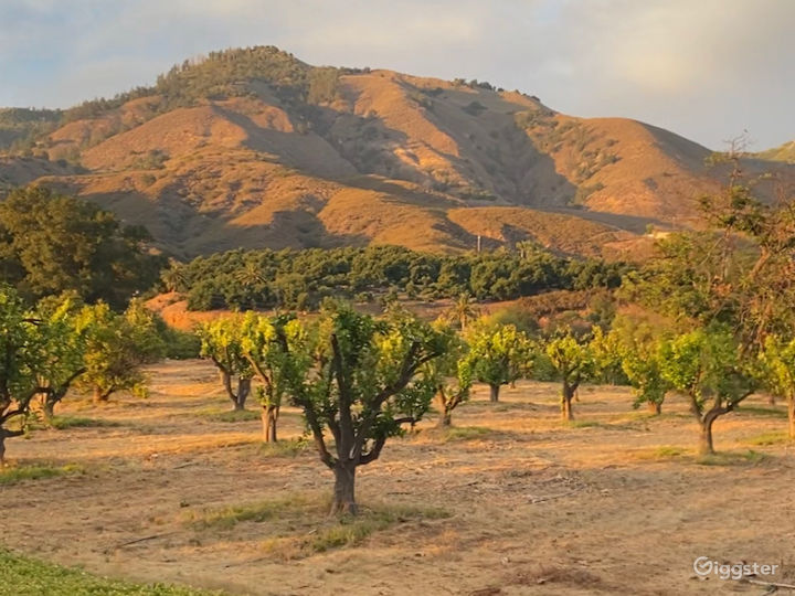 Orchard and Hilltop Views