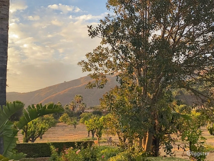 Orchard and Hilltop views (Peekaboo view of the Avocado grove on the hill)