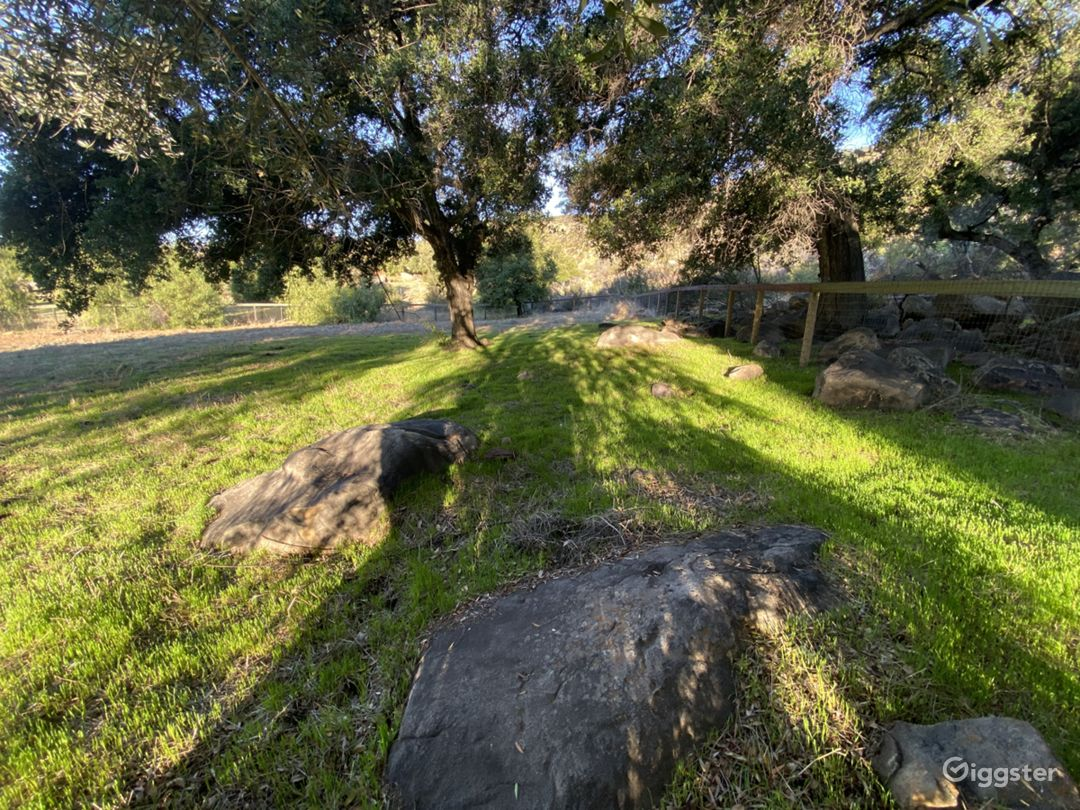 Smoky Tree Ranch  Photo 4