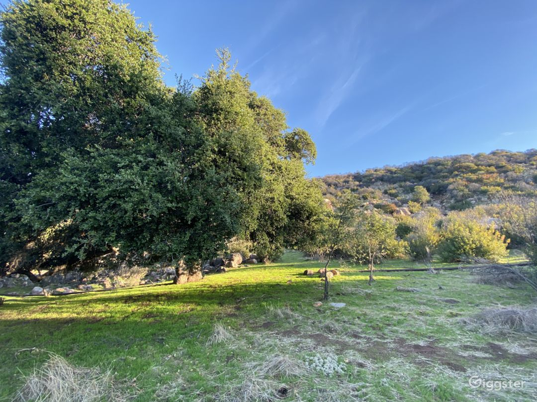 Smoky Tree Ranch  Photo 1