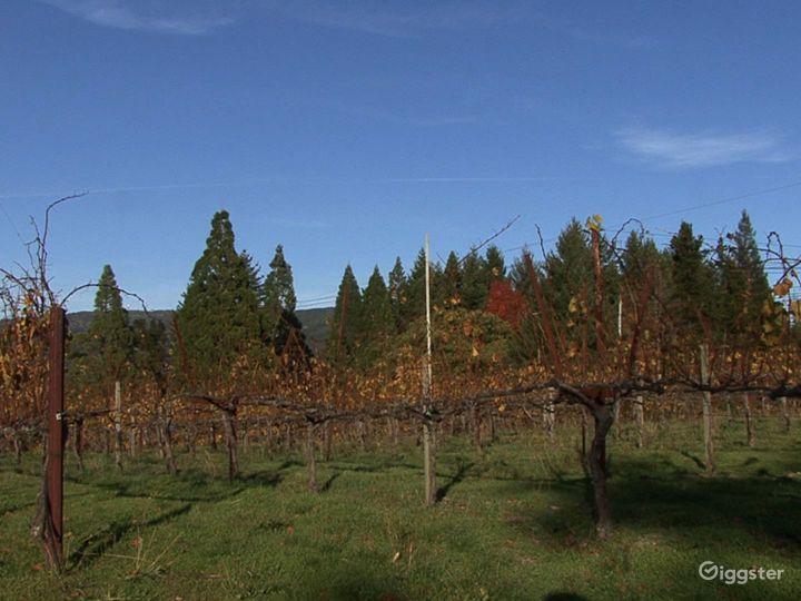 Breathtaking Mountain View Vineyards in Santa Cruz Photo 5