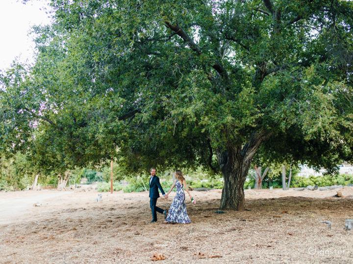 Big oak in open field