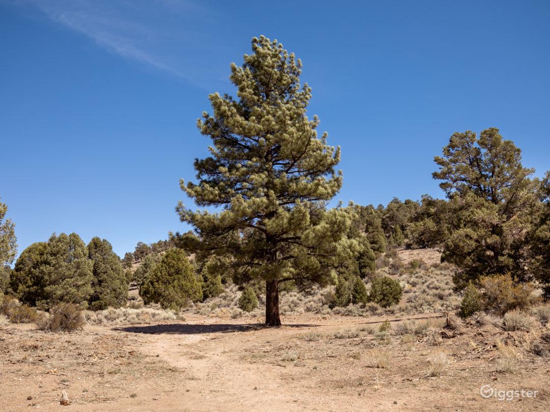 Mountain Woods  Photo 1