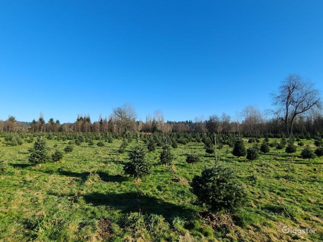 Christmas Tree Farm in Redmond Photo 1