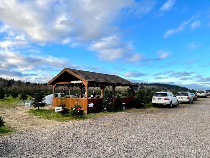 Christmas Tree Farm in Redmond Photo 2