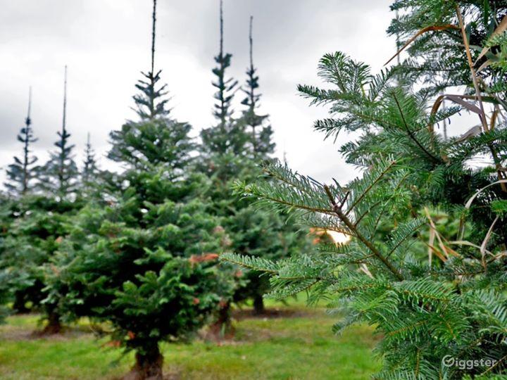 Christmas Tree Farm in Redmond Photo 4