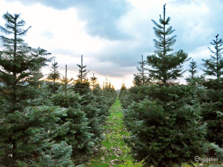 Christmas Tree Farm in Redmond Photo 3