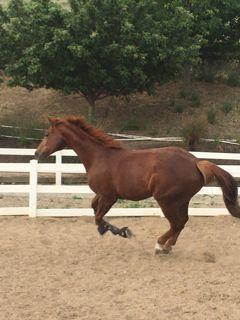 upscale horse farm+ rugged terrain + 2 avail homes | rent