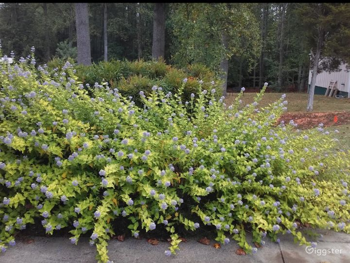 Beautiful Landscaping in Charlottesville Photo 4