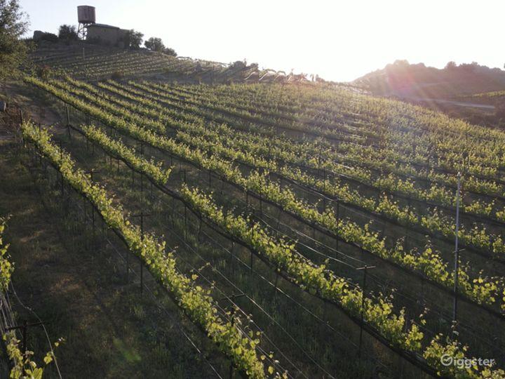 San Diego Hilltop Vineyard with Panoramic Views Photo 5