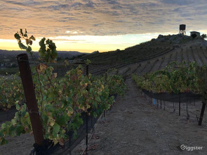 San Diego Hilltop Vineyard with Panoramic Views Photo 2