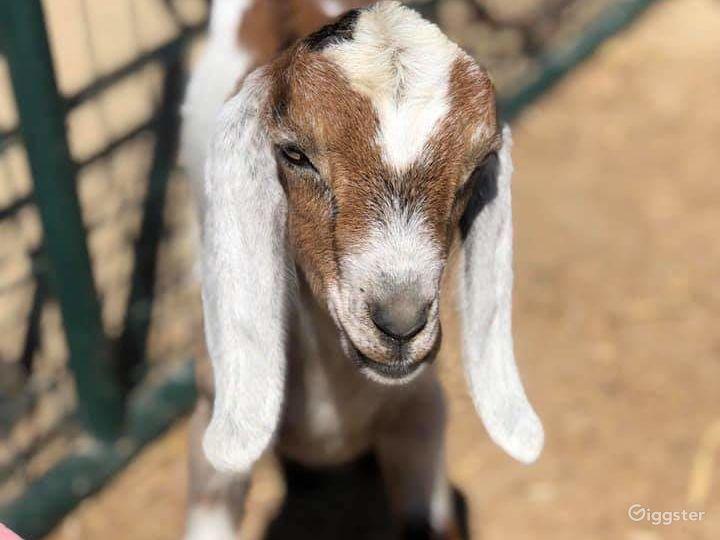 Rustic Farm / Animal Menagerie / Petting Zoo Photo 2