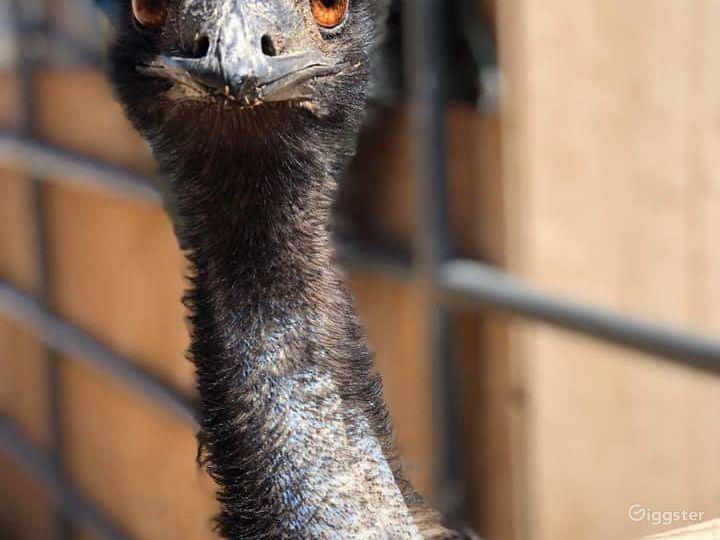 Rustic Farm / Animal Menagerie / Petting Zoo Photo 4