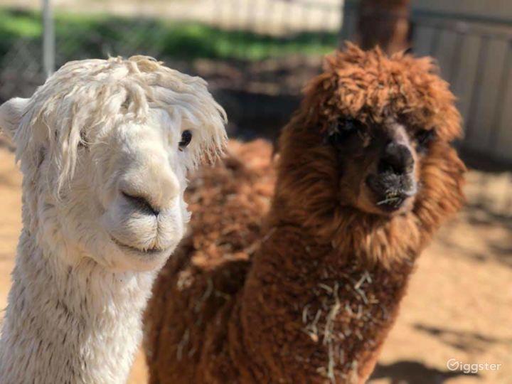 Rustic Farm / Animal Menagerie / Petting Zoo Photo 3