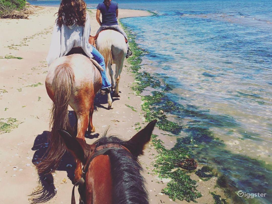 Riding Academy/Horse Ranch Photo 4