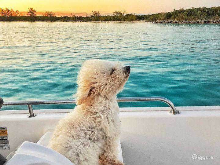 Sailing at great sailboat Photo 5