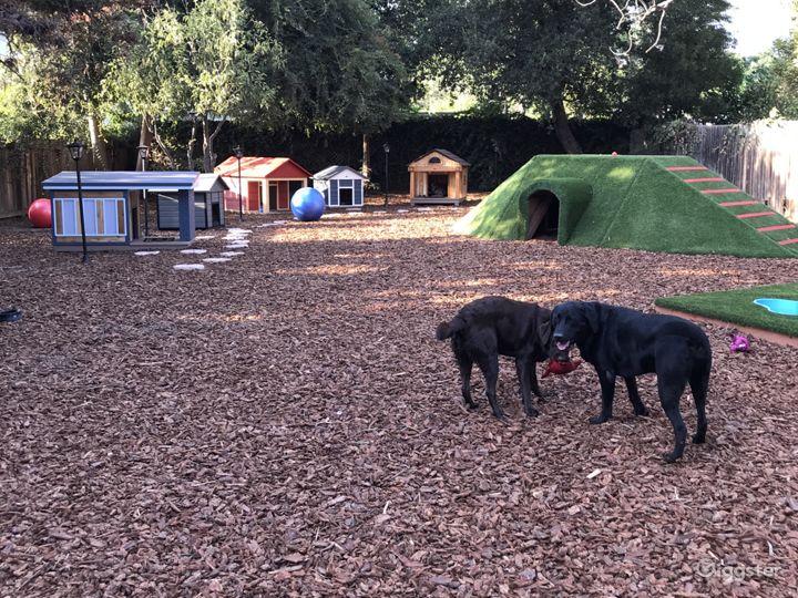 Dog playground and neighborhood