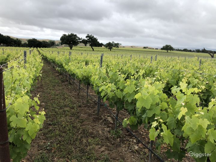 "Vineyards (""Mesa"")"