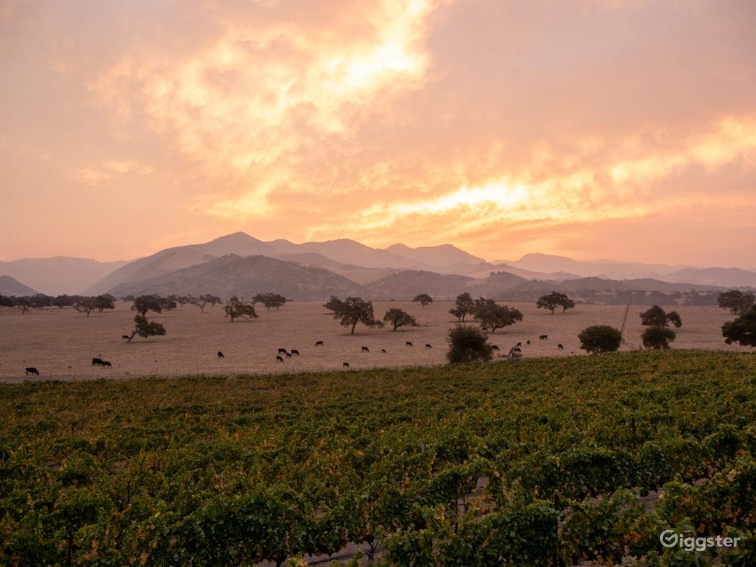 Vineyards & San Rafael Mountains sunrise