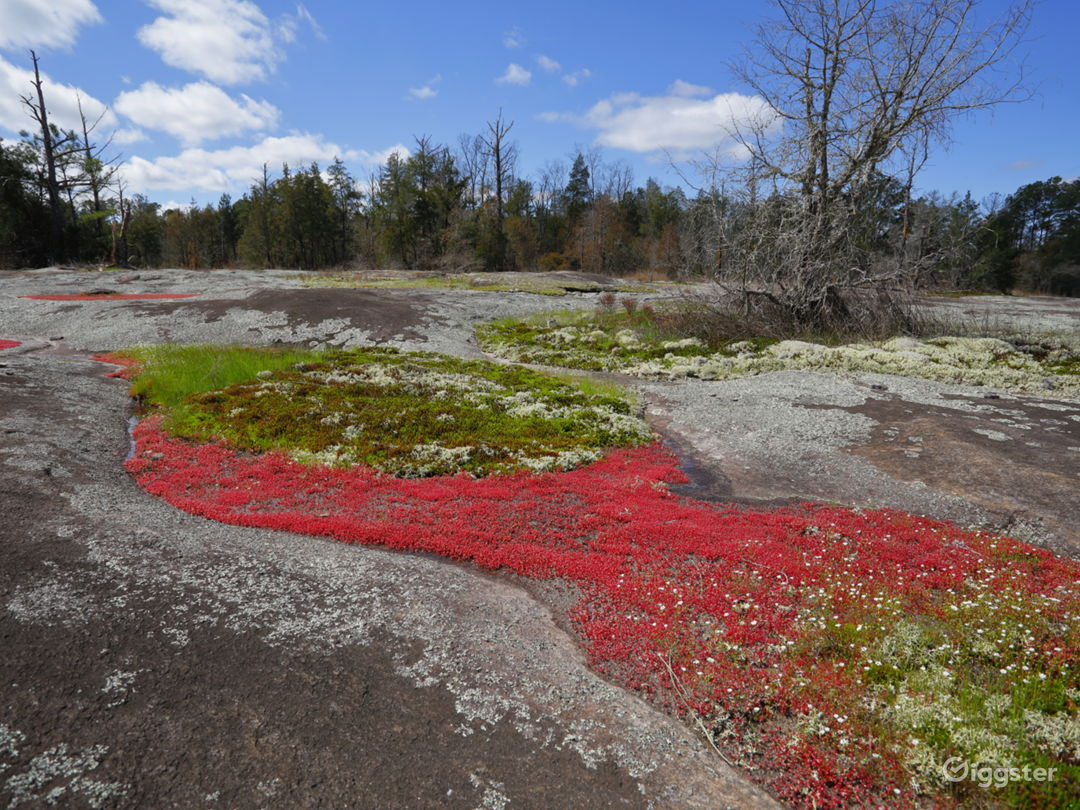 Spring algae bloom on the Black Shoals granite outcrops are a wonder to behold.