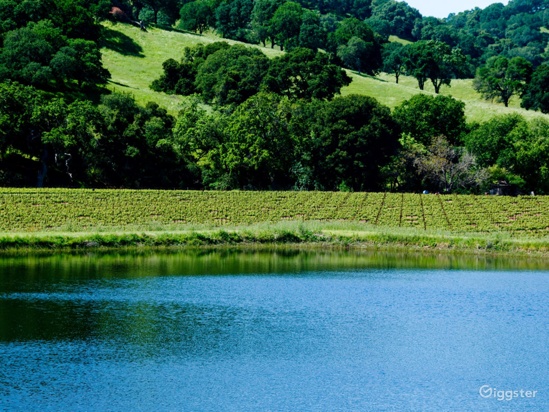 The lake and vineyard in early May.