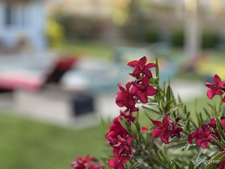 Midcentury modern 4 bed House + tropical backyard Photo 4